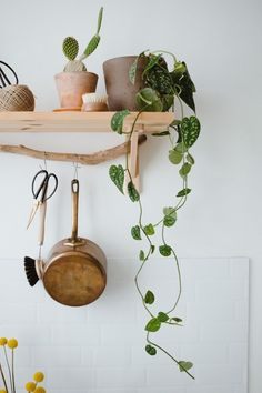 Plant topper: the Scindapsus Epipremnum (air purifying! + inspiration) - One Hand in my Pocket Hanging Plants Outdoor, White Shiplap Wall, Plant Projects, Brown House, Piece A Vivre, Apartment Kitchen, Home Staging, Interior Inspiration, Decorating Your Home