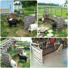 Recycled our old futon into a hay feeder for the goats