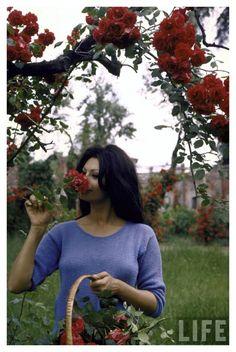 sophia loren picking roses in a garden at her villa, 1964 • alfred eisenstaedt •