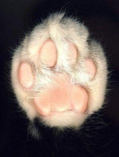 Animal paws are just as cute and sweet as human baby feet :)