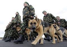 32 pictures of war dogs you need to see to believe                              …
