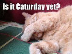 #Cats  #Cat  #Kittens  #Kitten  #Kitty  #Pets  #Pet  #Meow  #Moe  #CuteCats  #CuteCat #CuteKittens #CuteKitten #MeowMoe      Cute kittens Photo   http://www.meowmoe.com/7361/