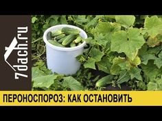 Po tomto životabudiči rastú uhorky ako divé: A nestojí to ani cent! Watering Can, Gardening Tips, Diving, Canning, Plants, Gardens, Sodas, Flowers, Scuba Diving