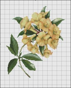 yellow hrododendron