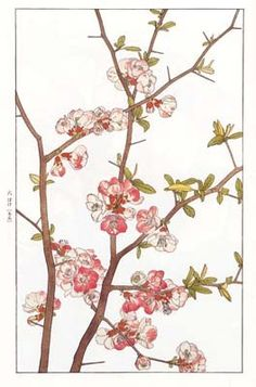 f:id:shinju-oonuki:20101013210130j:image