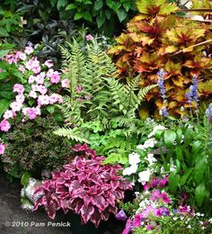 Coleus is one of the most versatile plants you can use in the garden. How could one not love it.