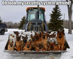 Wow! Can you imagine ringing the doorbell at that house?! I love how dif they… #germanshepherd