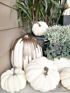 Collection of white pumpkins displayed on front porch for fall. This Elegant Fall Porch design can be easily recreated using millet plants, kale and tons of white pumpkins! Love the variety of fall porch decor. White Pumpkin Decor, White Pumpkins, Fall Pumpkins, Autumn Decorating, Pumpkin Decorating, Porch Decorating, Decorating Ideas, Decor Ideas, Elegant Fall Decor