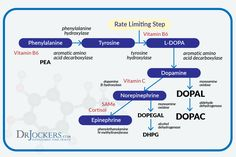 """Dopamine has been called the """"motivation molecule,"""" as it helps provide drive and focus. Learn how to boost up dopamine for motivation and focus. Dopamine Receptor, Brain Health, Mental Health, Heart Attack Symptoms, Serotonin Levels, Brain Science, Alzheimer's And Dementia, Neurotransmitters, Adrenal Fatigue"""