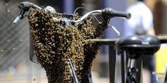 un-essaim-de-plusieurs-milliers-d-abeilles-s-est-forme_251144_510x255.jpg 510×255 pixels