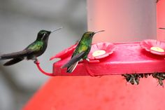 If you're trying to create a hummingbird-friendly garden, consider these five tips to attract more of the small bird.