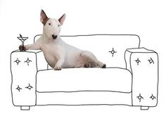 Artist Rafael Mantesso Gets Jimmy Choo Gig After His Bull Terrier Illustrations Remain The Cutest Thing On Instagram