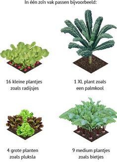 Hoeveel plantjes passen er in een moestuinvak