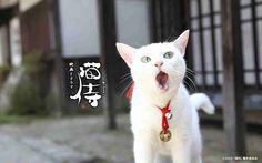 「猫侍」が好きな人語りましょう