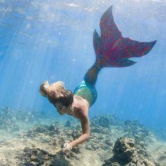 Siren Mermaid, Mermaid Cove, Mermaid Melody, Mermaid Lagoon, Mermaid Kisses, Mermaid Fairy, Real Mermaids, Mermaids And Mermen, Sirens