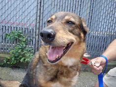 "SWEET SENIOR ""HOLLY"" NEEDS YOU!!!! STOP BY & MEET THIS LOVABLE GAL IN PERSON!!! WPHS PITTSBURGH, PA>>>PetHarbor.com: Animal Shelter adopt a pet; dogs, cats, puppies, kittens! Humane Society, SPCA. Lost & Found."