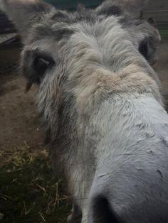 Donkey love Happy Animals, Farm Animals, Cute Creatures, Beautiful Creatures, Miniature Donkey, Eeyore, Horse Photography, Donkeys, Burritos