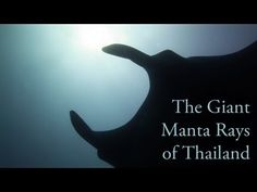 """Relax and take a subaquatic flight with the graceful """"birds of the deep"""", the giant manta rays of Thailand's Koh Bon, Hin Daeng and Richelieu Rock.    Huge thanks to Solidtrax for the music """"Are We Dreaming"""". Find them at http://soundcloud.com/solidtrax and https://twitter.com/Solidtrax    As always, it looks best at 720p HD in a big window or full screen."""