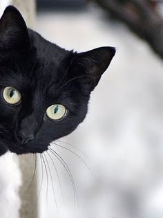 "#BlackCat ~ ""The hardest thing of all is to find a black cat in a dark room, especially if there is no cat."" ~ Confucius"