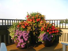 The best flowers for beautiful flower pots unify the planting. This group of three containers repeats the same flower and foliage colors. Large Planter Boxes, Large Planters, Outdoor Planters, Glass Garden, Water Garden, Garden Plants, Garden Stand, Garden Boxes, Container Plants