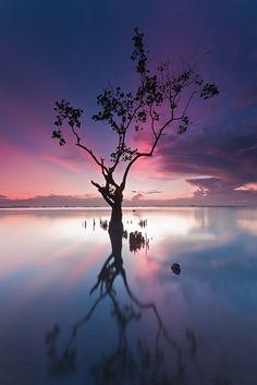 ✯ Purple sunrise ... lone tree reflected in still waters ...