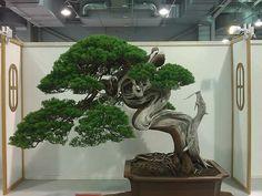 Juniper Bonsai, Bonsai Styles, Bonsai Art, Gypsy, Trees, Gardening, Plants, Flowers, Tree Structure