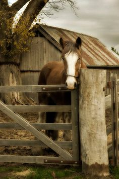 a horse and barn / country life, sweet and simple