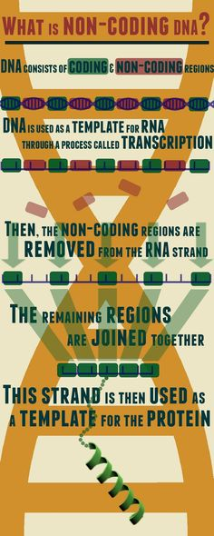 What is non-coding DNA?