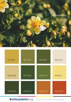 New moodboard nature green color schemes 70 ideas Green Color Schemes, Paint Color Schemes, Nature Color Palette, Green Colour Palette, Forest Green Color, Olive Green Color, Coordination Des Couleurs, Design Seeds, Design Graphique