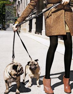 Pugs - the perfect fashion accessory