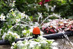 Gocciolatore aspersore.  Con portata regolabile per ogni esigenza di irrigazione a goccia, è dotato di membrana al silicone con funzione anticalcare. Si applica facilmente a pressione sul tubo capillare o sul tubo collettore. http://www.claber.it/prodotti/scheda-prodotto.asp?cod=91232