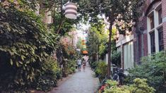668ac94601 Image result for street filled with plants