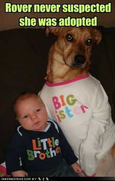 funny dog pictures - Rover never suspected she was adopted