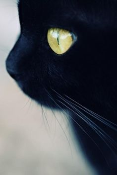 black cat, cat, cute, eyes - inspiring picture on Favim.com