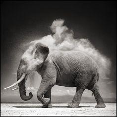 Elephant with Exploding Dust, Amboseli 2004, Nick Brandt