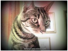 Athena Cat Goddess Wise Kitty: Lomo Effect Art & a Cute Cat TV Ad  #CaturdayArt