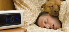Getting a good night's sleep might just be the best productivity hack you have. Here's how to catch some better Z's tonight. Natural Snoring Remedies, Sleep Quality, Sleeping Dogs, Going To Work, Conspiracy, Good Night Sleep, Dog Love, Productivity, Pitbulls