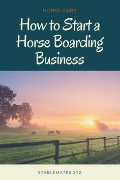 How to Start a Horse Boarding Business Stable Mates