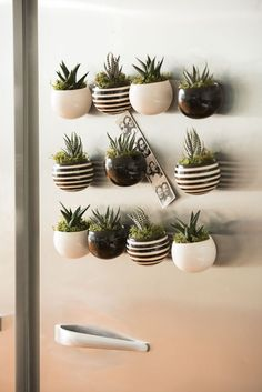Indoor Succulent Garden: Mini Magnet Succulent Garden, Set of 3