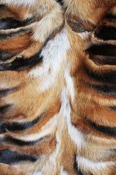 fur from the olsens.  purrrrr.