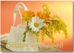 a daisy today Colorful Flowers, Beautiful Flowers, Flower Catalogs, Flowers For Algernon, Container Flowers, Flower Pictures, Flower Art, Floral Arrangements, Flower Arrangement