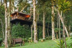 Treehouse in Monte Verde, Brazil. = WE DON'T SPEAK ENGLISH, ONLY PORTUGUESE! =  * * * NOTICE: THE PRICES HERE ARE FOR 2 ADULTS. FOR 3 PERSONS, ASK FOR PRICES VIA MESSAGE BEFORE MAKING A RESERVATION REQUEST * * *  A Cozy TreeHouse on the Mountains. Accommodation up to 3 person. We ...