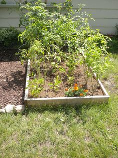 Raised bed gardening is amazing. If you need Raised Bed Ideas, these simple tips will make your raised bed garden effective and beautiful! Raised Garden Beds, Raised Beds, Square Foot Gardening, Large Backyard, Outdoor Rooms, Lawn And Garden, Raising, Create Yourself, Things To Come