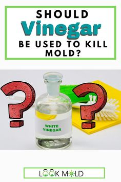 You may have heard to use white vinegar to kill mold but is it the best option? You may be surprised to know that vinegar does not kill all types of mold. In Fact, recent studies suggest there are many types it may not kill. #vinegar #mold #cleaningsolution #cleaning Cleaning Crew, House Cleaning Tips, Diy Cleaning Products, Cleaning Solutions, Cleaning Hacks, American Society For Microbiology, Mold Exposure, Types Of Mold, Domestic Cleaning
