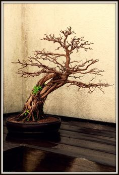 20 Bonsai Tree Tattoos Ideas Bonsai Tree Tattoos Tree Tattoo Tattoos