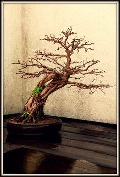 Japanese Tree Tattoo Bonsai Coloring Books 15 Ideas For 2019 Bonsai Art, Bonsai Garden, Bonsai Plants, Bonsai Trees, Tree Tattoo Designs, Tattoo Ideas, Bonsai Tree Tattoos, Japanese Tree, Pine Tree Tattoo