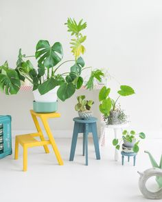 JOELIX.com   Steel blue stool with plants