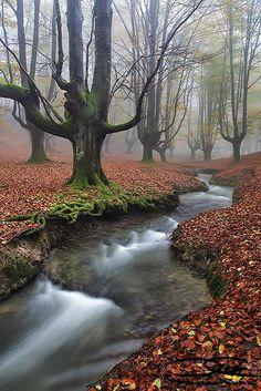 Otzarreta, Gorbeiako Parke Naturala, Biscay, Basque Country >>> Taking a walk here would be fantastic!