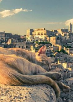 猫と風景の画像 07|ねこLatte+
