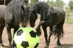 Friesians playing soccer! Find this soccer ball cover for the Jolly Mega Ball here: www.chicksaddlery.com/page/CDS/PROD/JB4300